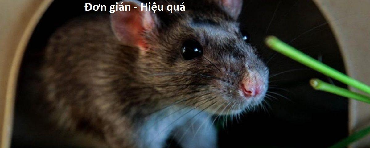 Cách đuổi chuột ra khỏi nhà hiệu quả