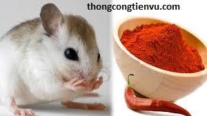 Đuổi chuột bằng ớt bột
